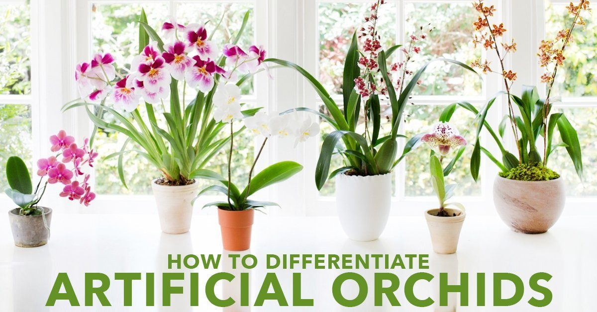 How To Differentiate Artificial Orchids
