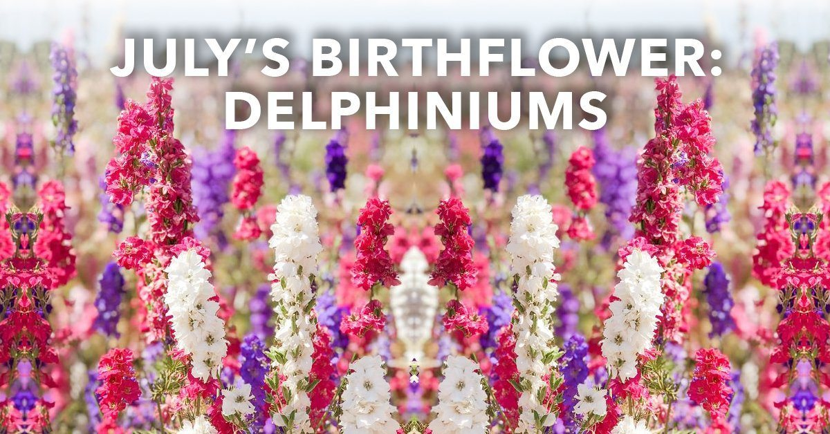 July's Birthflower: Delphiniums