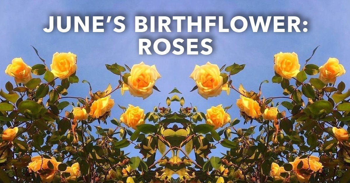 June's Birthflower: Roses