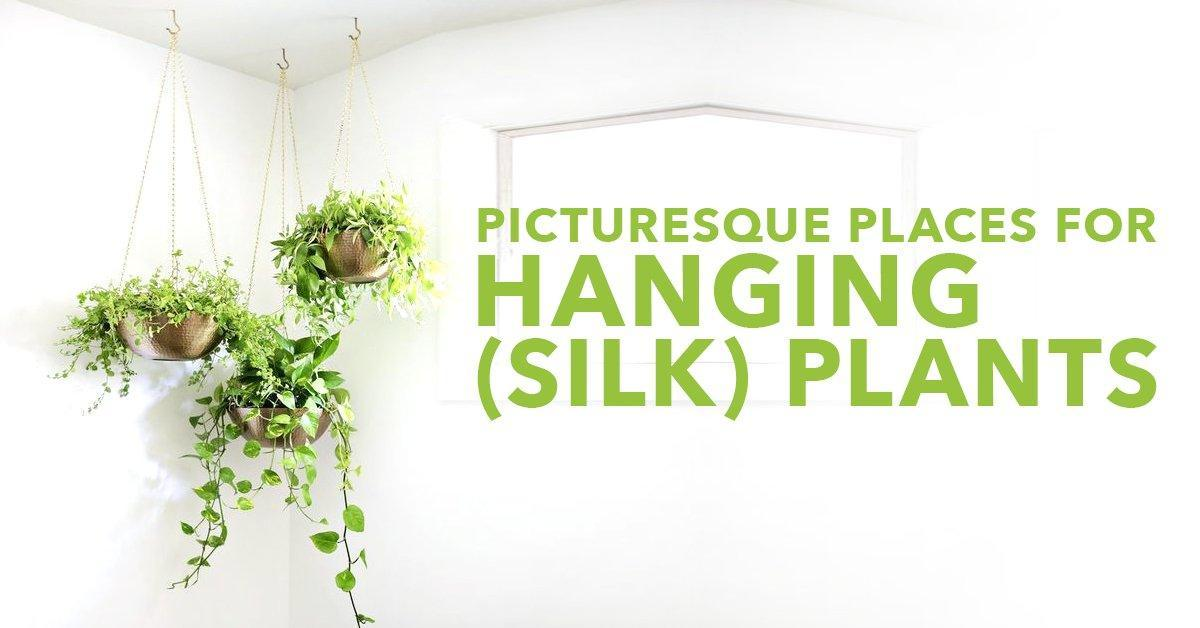 Picturesque Places For Hanging (Silk) Plants