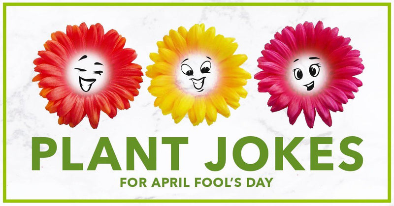 Plant Jokes for April Fool's Day 2020