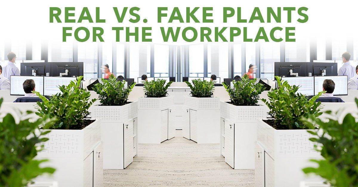 Real vs Fake Plants For The Workplace