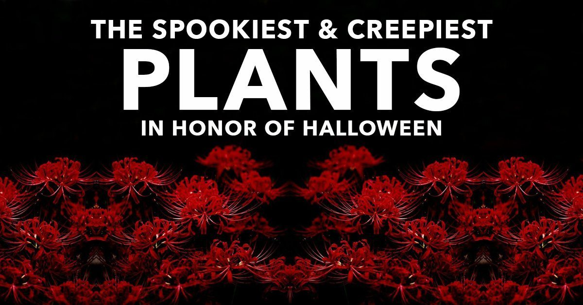The Spookiest (And Creepiest!) Plants In Honor of Halloween
