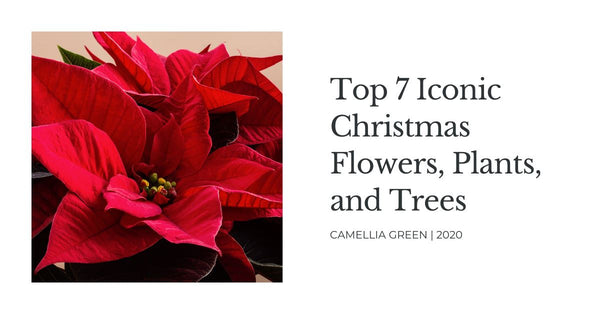 Top 7 Iconic Christmas Flowers, Plants, and Trees