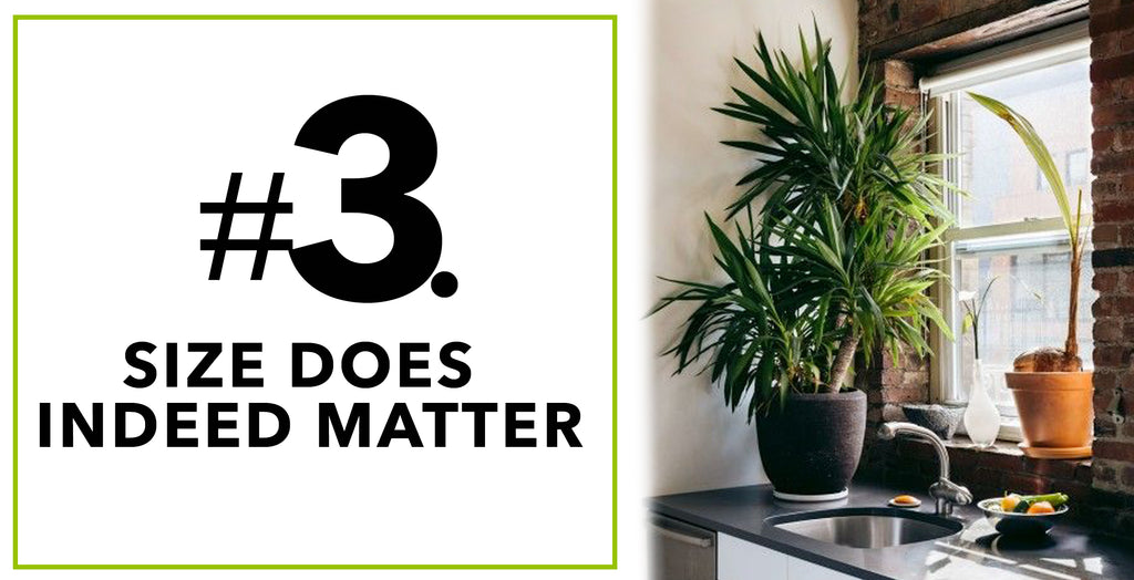 Tips On How To Spruce'n Up Kitchen Spaces With Artificial Plants: Size Does Indeed Matter