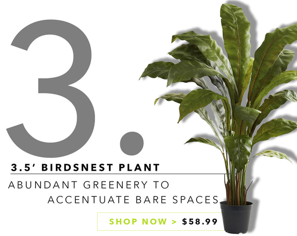 Groovy {Silk} Greens For Father's Day: Birdsnest Plant