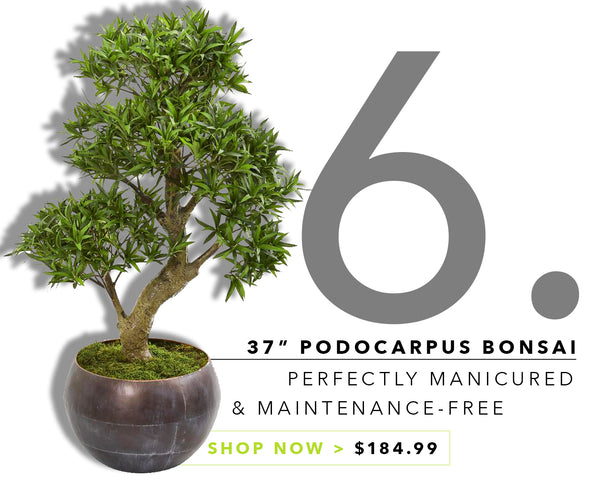 Groovy {Silk} Greens For Father's Day: Bonsai Tree