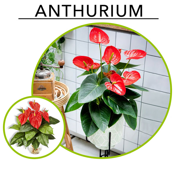 Tropic Like its Hot; Artificial Plants To Create Your Own Urban Jungle Indoors:Anthuriums