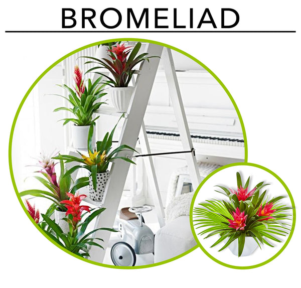 Tropic Like its Hot; Artificial Plants To Create Your Own Urban Jungle Indoors: Bromeliads