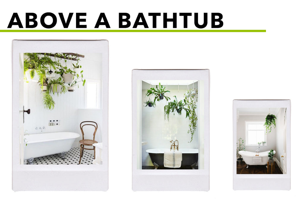 Picturesque Places For Hanging (Silk) Plants: Above A Bathtub