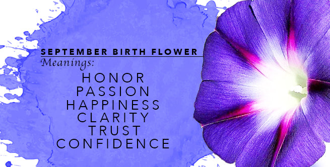 Meanings of September's Birth Flower: Morning Glory