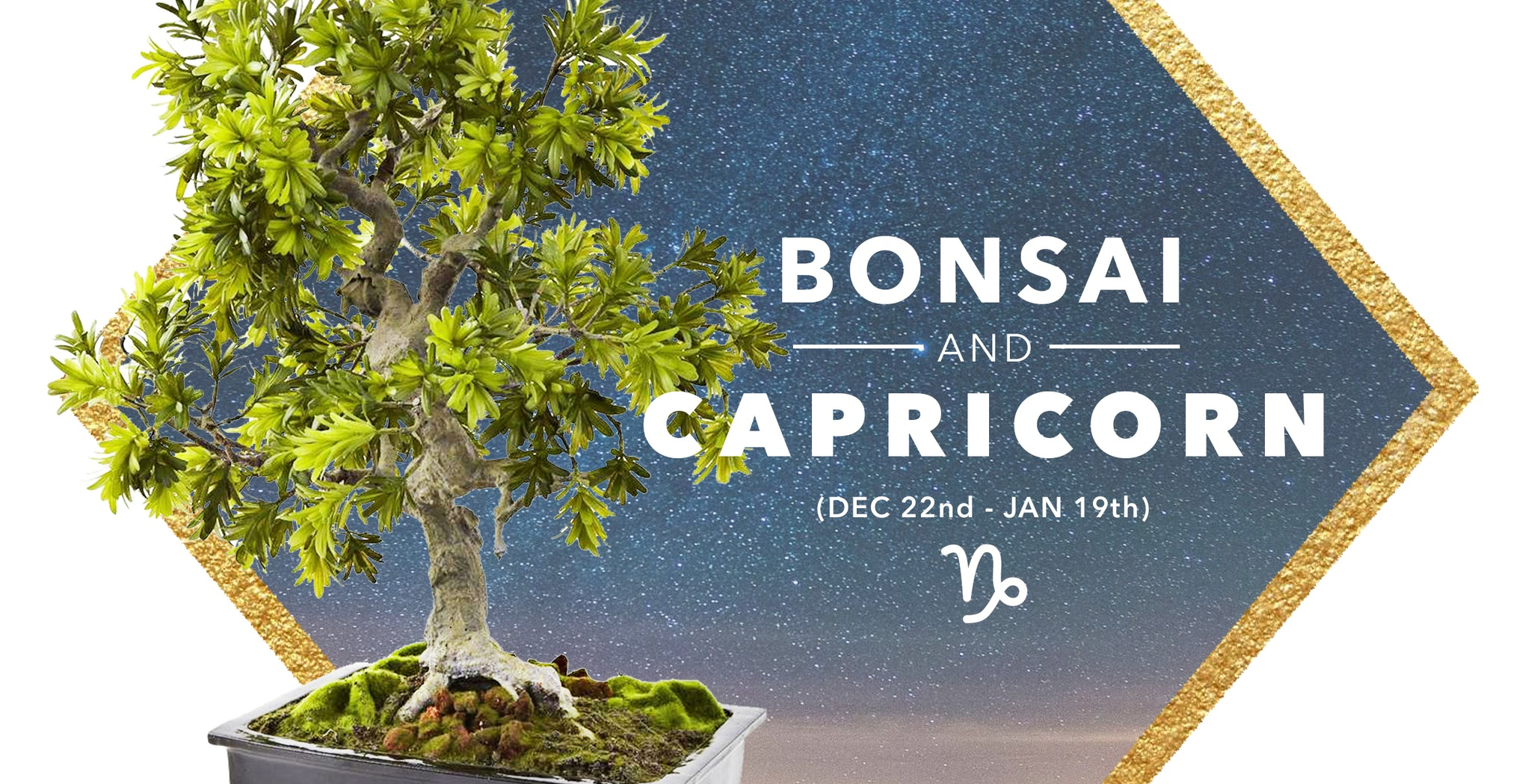 SILK BONSAI TREES & CAPRICORN