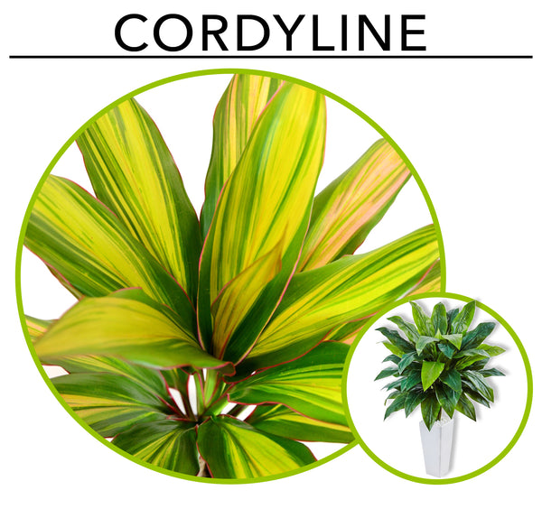 Tropic Like its Hot; Artificial Plants To Create Your Own Urban Jungle Indoors: Cordylines