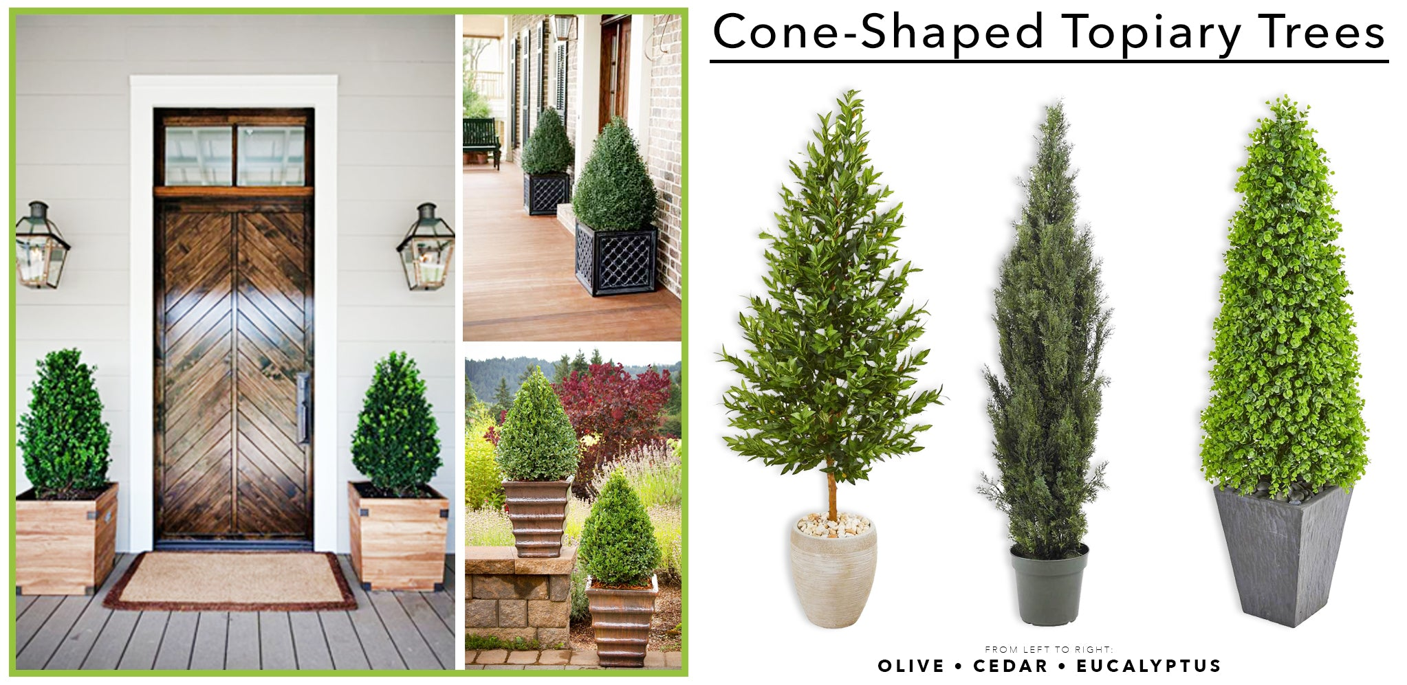 Cone Shaped Topiary Trees