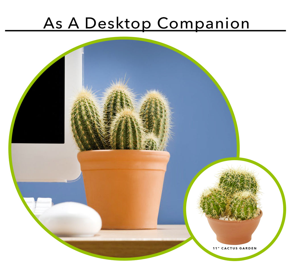 Using Artificial Succulents As A Desktop Companion