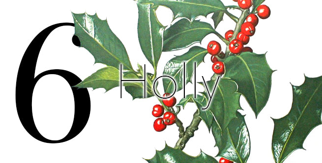Iconic Christmas Flowers And Plants: Holly