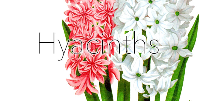 Artificial Winter Florals To Outlive The Holidays: Hyacinths