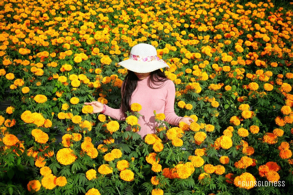 October's Birth Flower: Marigolds