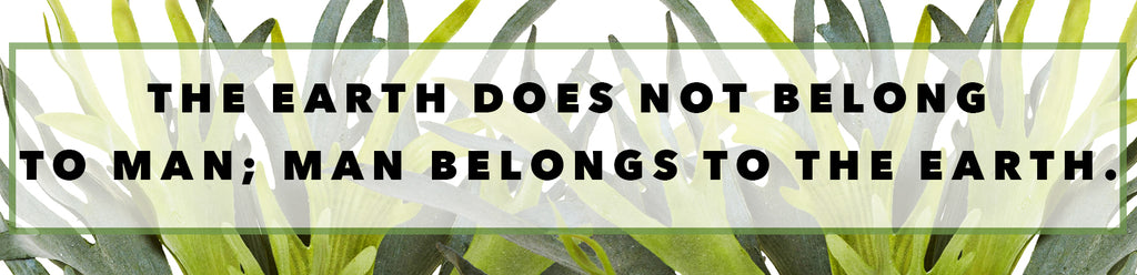 Inspirational Quotes For Earth Day: The Earth Does Not Belong To Man; Man Belongs To The Earth