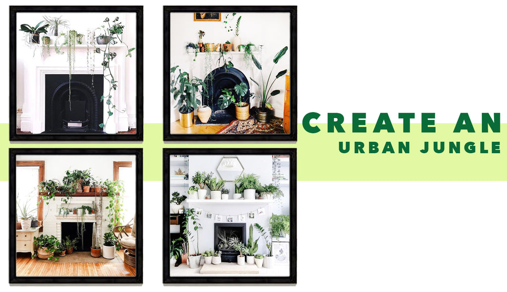 Create An Urban Jungle