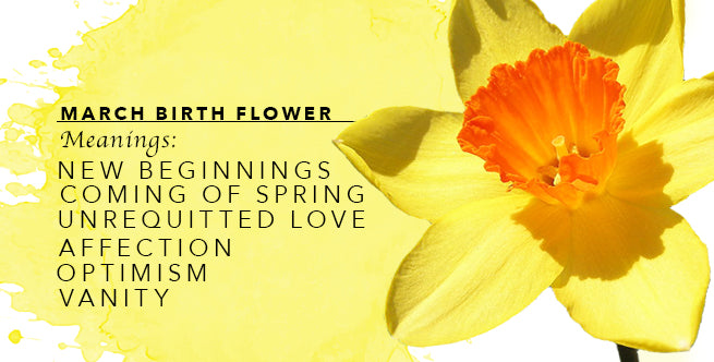 The Meanings of March's Birthflower: Daffodils