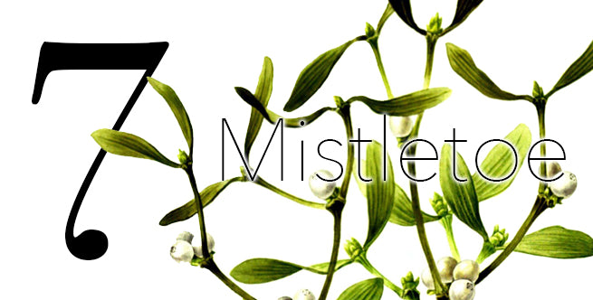 Iconic Christmas Flowers And Plants: Mistletoe