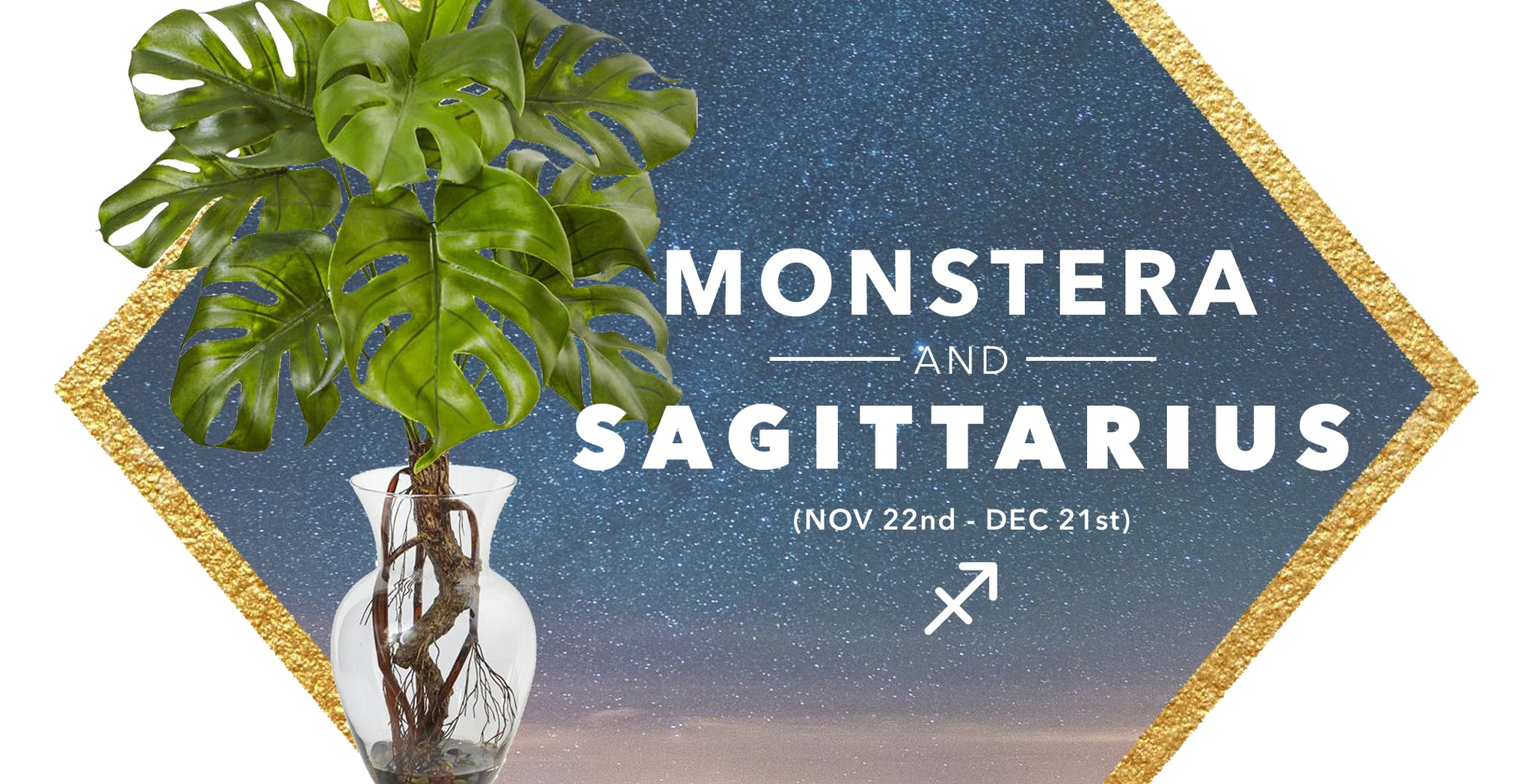 SILK MONSTERA PLANTS & SAGITTARIUS