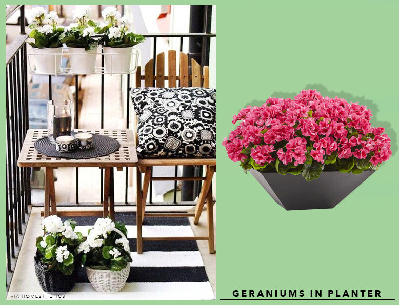 Spring Cleaning + Sprucing With UV Resistant Geraniums