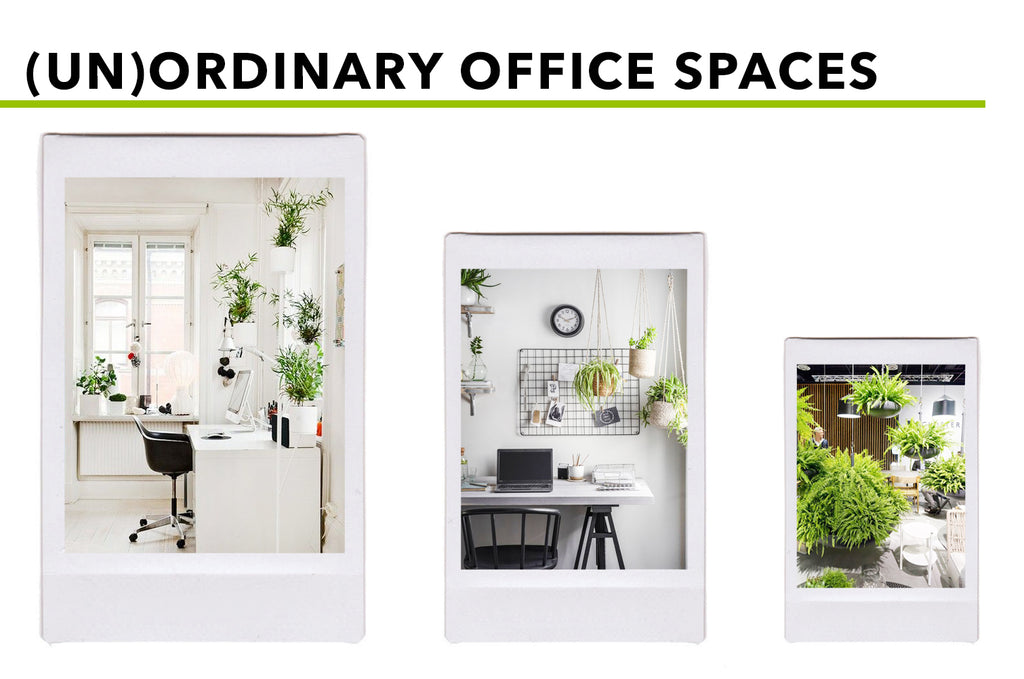 Picturesque Places For Hanging (Silk) Plants: (Un)Ordinary Office Spaces