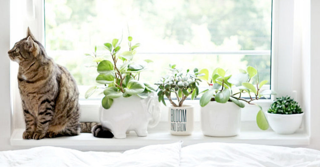Ensuring Your Pet's Safety with Fake Plants