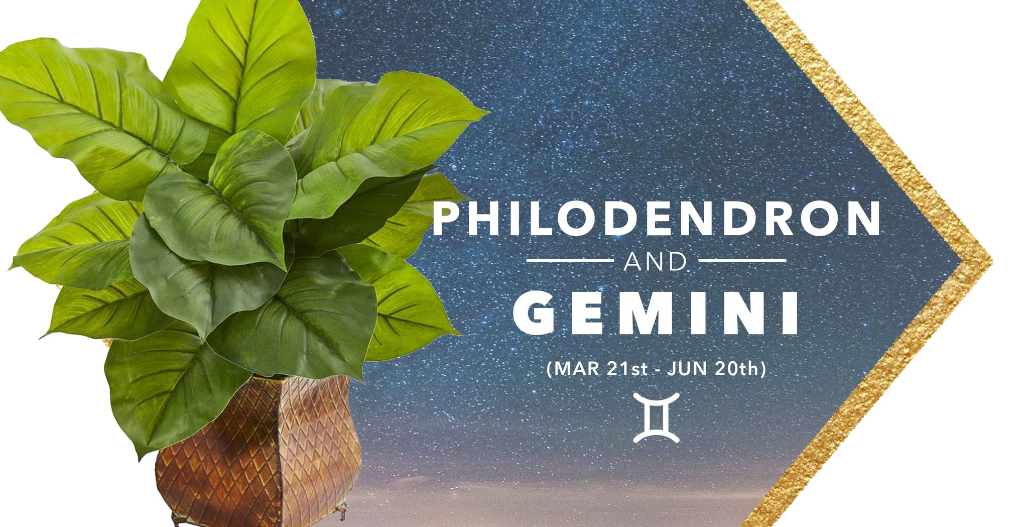 SILK PHILODENDRON PLANTS & GEMINI