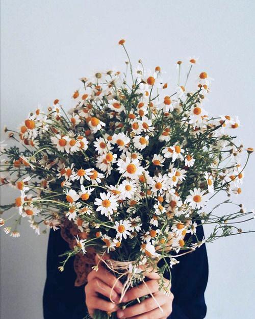 April's Birthflower: Daisies