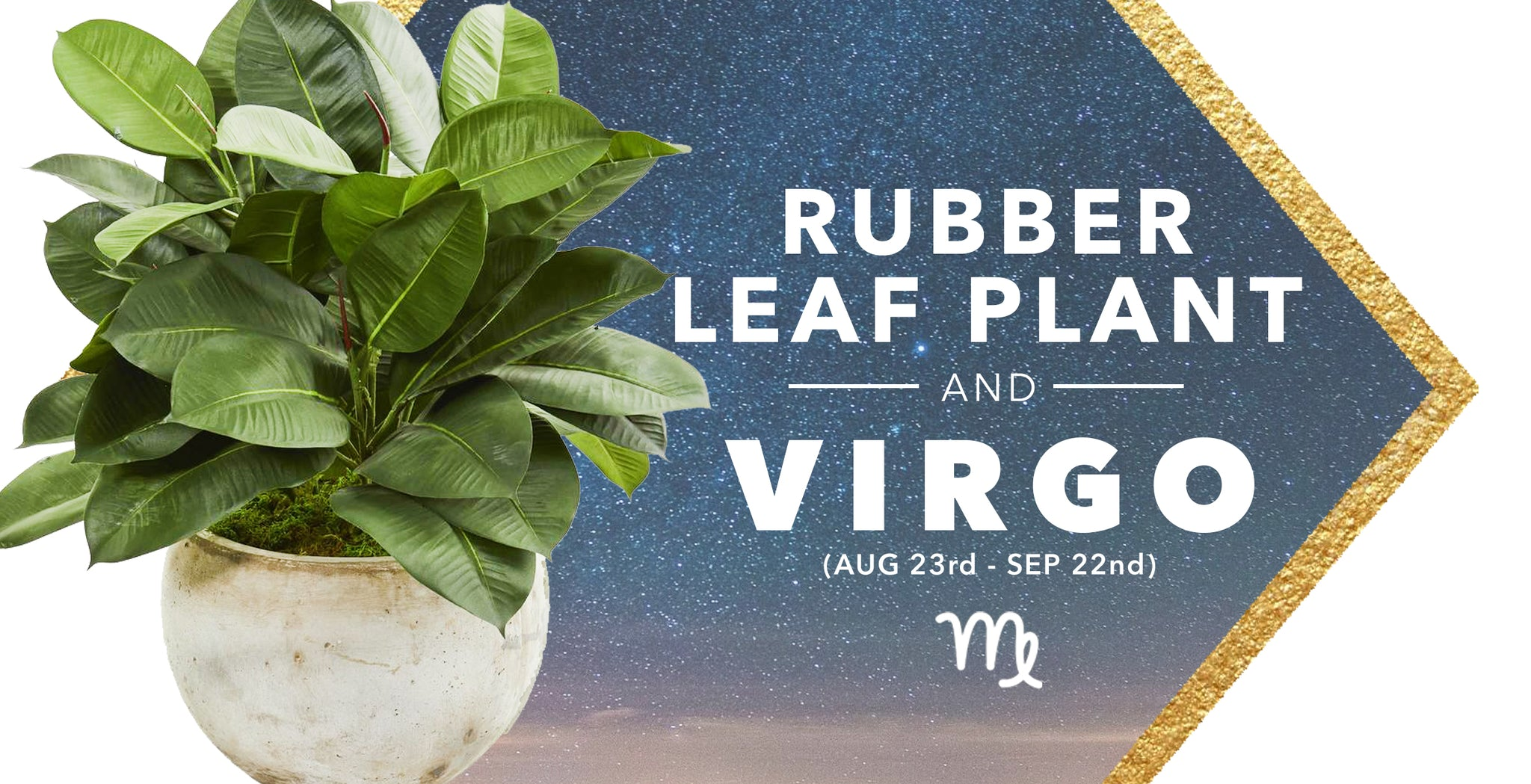 SILK RUBBER LEAF PLANTS & VIRGOS