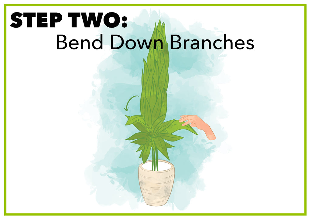 Bend Down Branches
