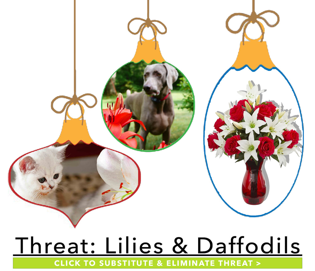 Winter Plants Harmful to Pets: Lilies & Daffodils
