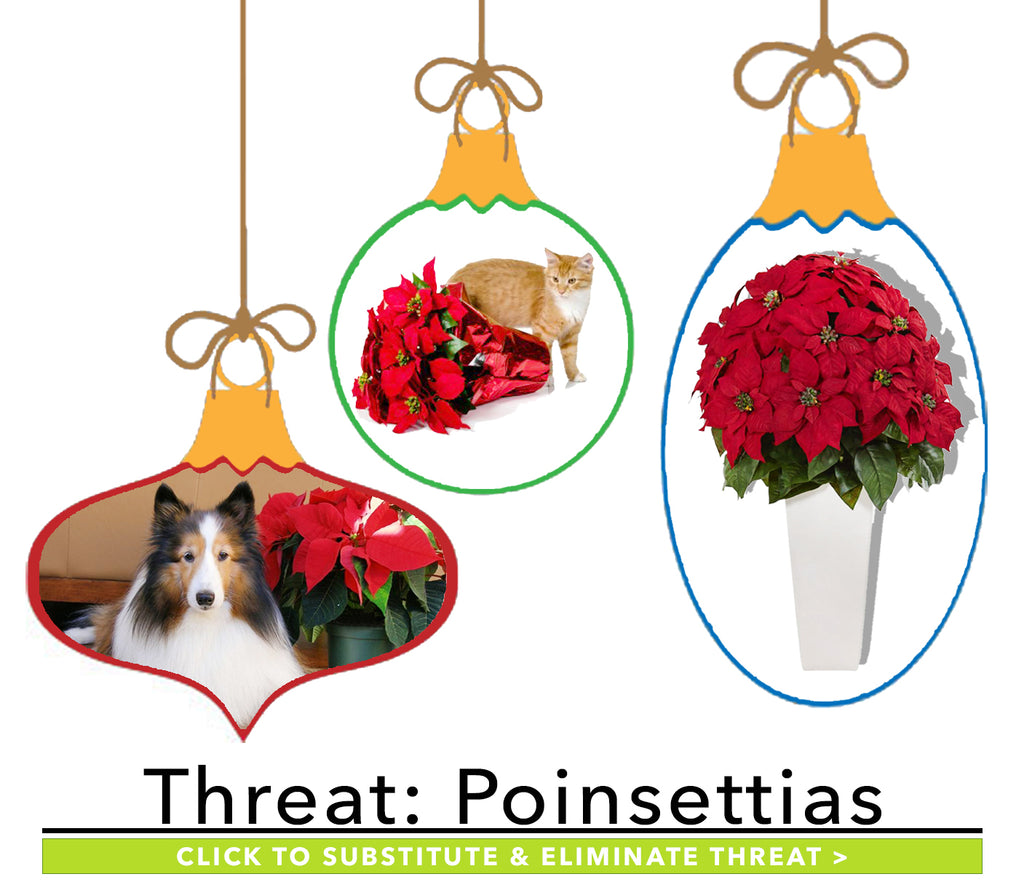 Winter Plants Harmful to Pets: Poinsettias