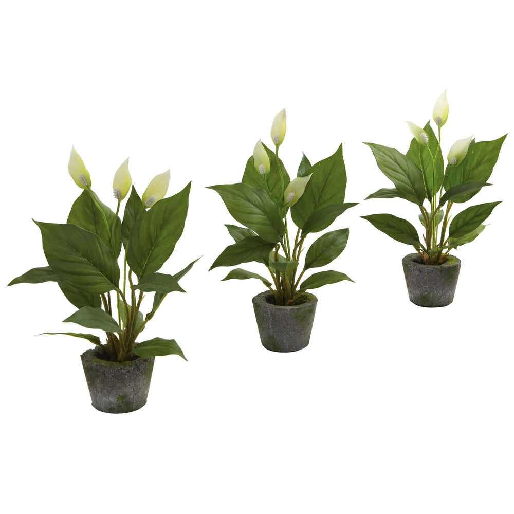 "11"" Spathyfillum w/Cement Planter (Set of 3)"