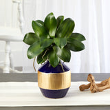 "14"" Phalaenopsis Orchid Leaf Artificial Plant in Blue and Gold Planter"