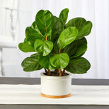 "15"" Fiddle Leaf Artificial Tree in White Planter"