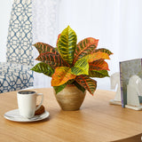 "15"" Garden Croton Artificial Plant in Ceramic Planter (Real Touch)"