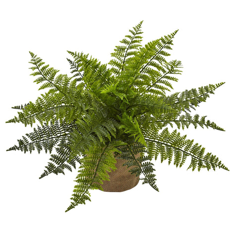 Silk Ruffle Fern Plants