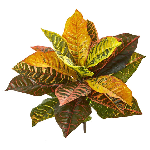 Silk Croton Trees
