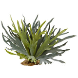 "21"" Staghorn Fern (Set of 2)"