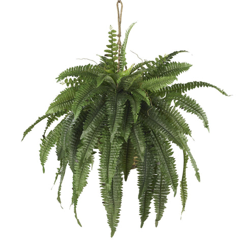 Hanging and Artificial Fern Plants