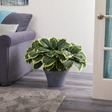 "23"" Variegated Hosta Artificial Plant in Gray Planter"
