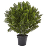 3' Cedar Bush (Indoor/Outdoor)