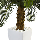 3' Cycas Tree in White Tower Planter