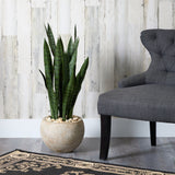 "32"" Sansevieria Artificial Plant in Sand Colored Planter"