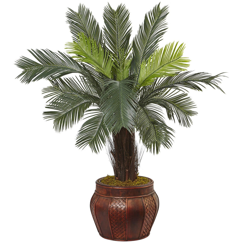 3.5' Cycas Tree in Wood Planter