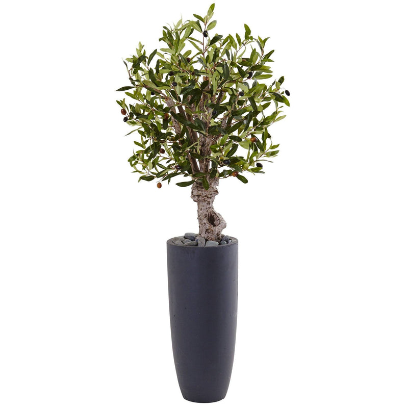 3.5' Olive Tree in Gray Cylinder Planter
